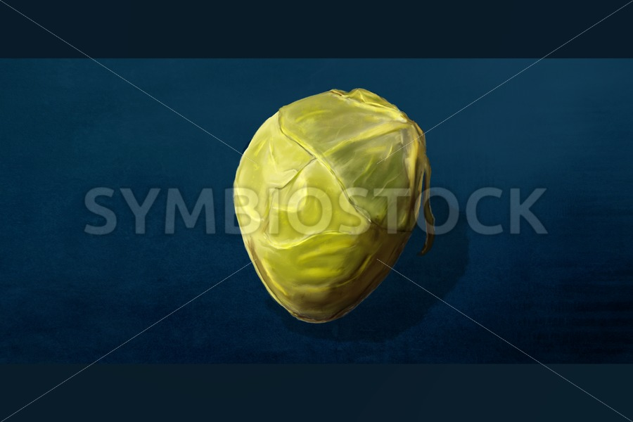 Brussels Sprout - Jan Brons Stock Images
