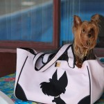 Happy Customer in an I Love New Yorkie tote
