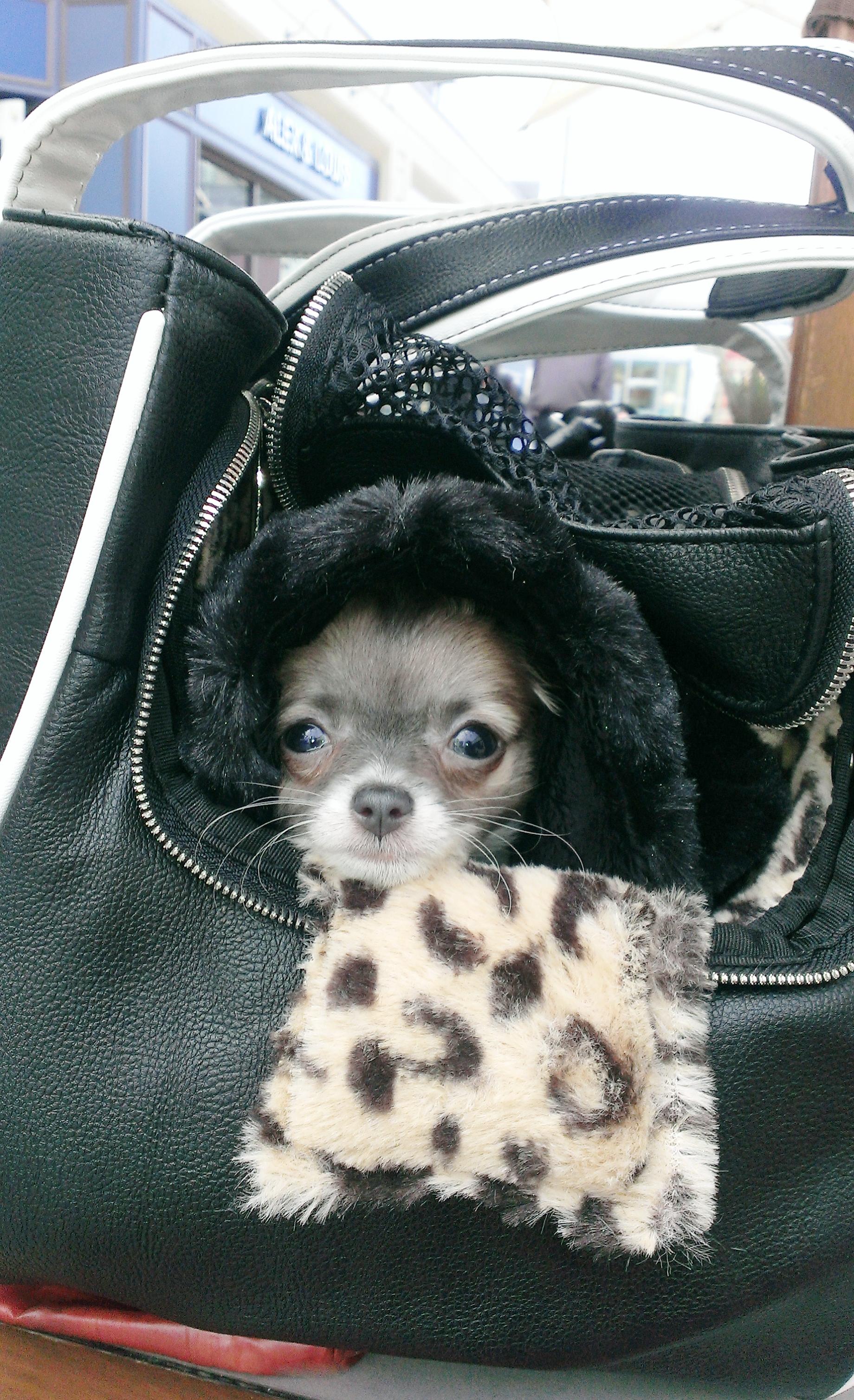 Te Quiero Chihuahua Faux Leather Rescue Me tote.