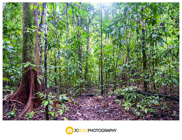 Rainforests in  Costa Rica