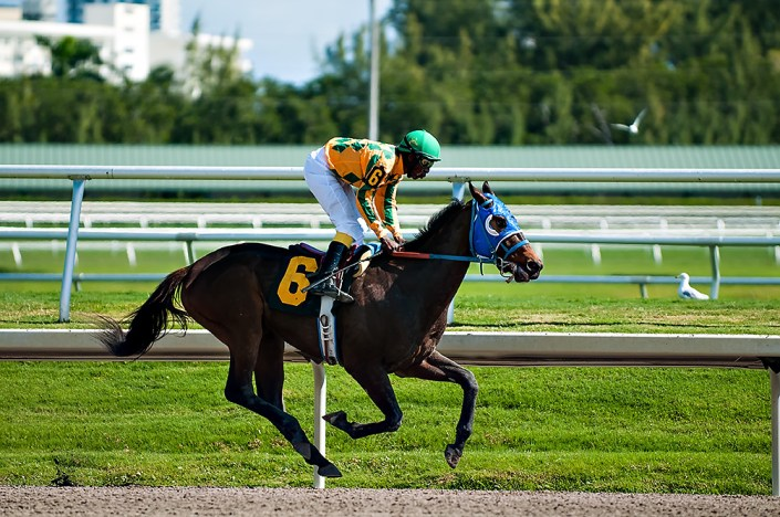 Horse racing at Gulfstream Park