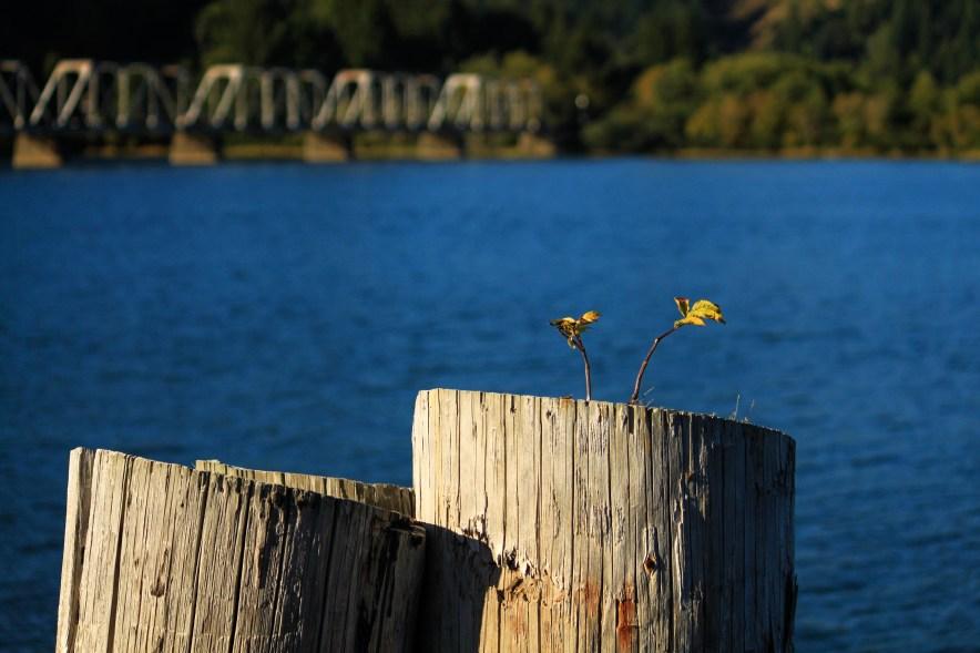 Reedsport Umpqua River
