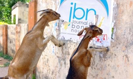 Le JBN adore les animaux. Les animaux adorent le JBN.