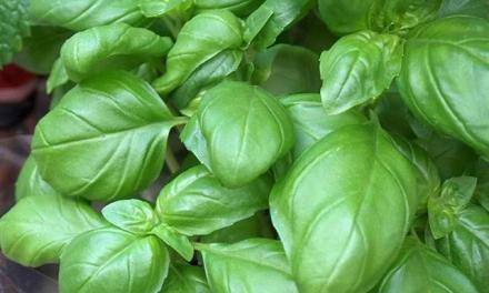 10 plantes et légumes que vous pouvez faire repousser indéfiniment