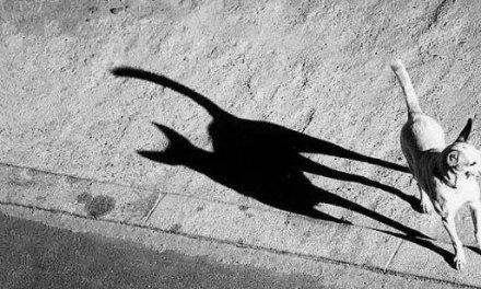 20 photographies dont les ombres racontent une histoire complètement différente des clichés originaux