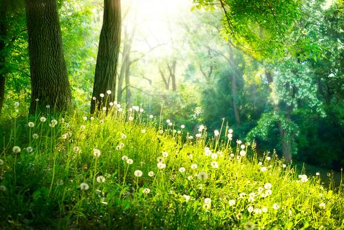 Lorsque vous entrez dans une forêt…