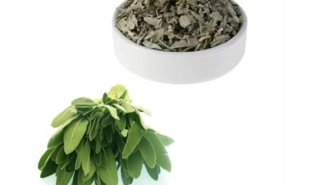 Remède naturel ménopause: La sauge.