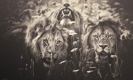 Très engagée pour la cause animale, la photographe allemandeManuela Kulparetranscrit par cette série dephotosla sensibilité des animaux.