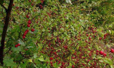 Une forêt comestible pour atteindre l'auto-suffisance alimentaire