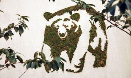 Découvrez comment faire du graffiti végétal ! Le résultat est vraiment classe…