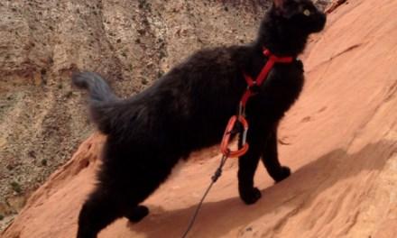 Millie, le chat adopté devenu un partenaire d'escalade idéal (vidéo)