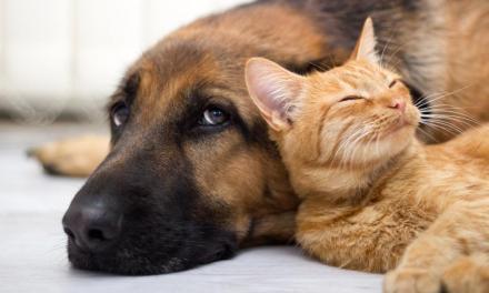 Cohabitation chien-chat: les bons réflexes – notretemps.com