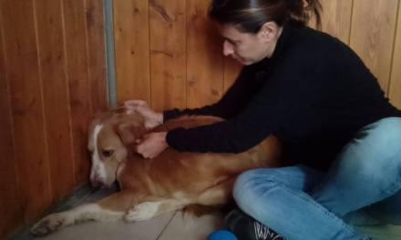 Un massage shiatsu pour les animaux? Oui c'est possible et cela soulage bien des maux. Sandra Lasseri – Piat nous explique tout.