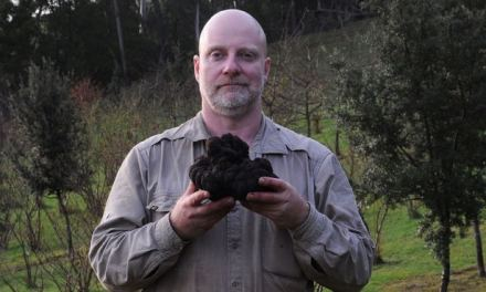 Découverte de la plus grosse truffe noire jamais déterrée