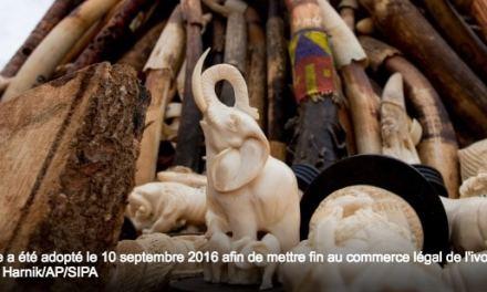 Les dirigeants de la planète appellent à mettre fin au commerce légal d'ivoire