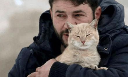 Syrie : il défie les bombes pour sauver les chats d'Alep