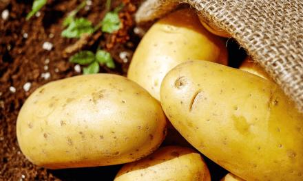 Australie: Il fabrique un appareil photo avec une patate (et ça marche)