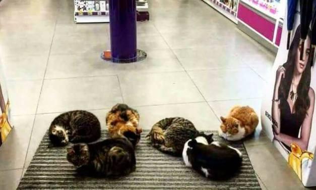 Un centre commercial et beaucoup de magasins turcs ouvrent leur porte jour et nuit aux chiens et chats errants afin qu'ils puissent se réfugier du froid.