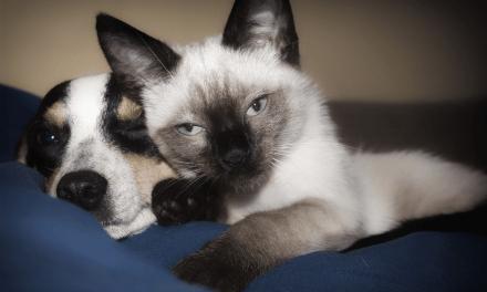 Royaume-Uni: Des entreprises accordent des congés payés en cas d'adoption d'animal.