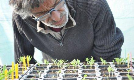 Le combat tranquille d'un paysan pour la liberté des semences