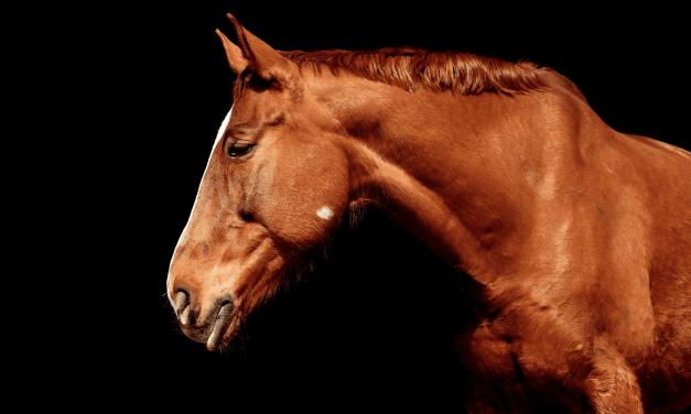 Le pouvoir des chevaux…