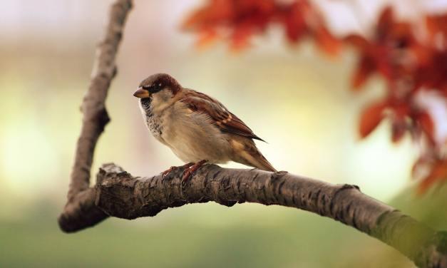 L'oiseau qui aimait les tapis roulants.