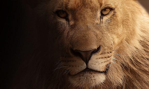 Journée mondiale des animaux célébrée par la WWF