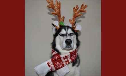 Anuko, le nouveau grumpy dog préféré des internautes.