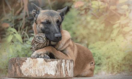Une photographe immortalise la tendre amitié entre son chien et un hibou à travers des clichés sublimes