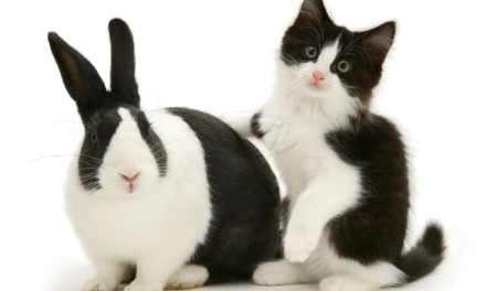Vidéo: des chats et des lapins