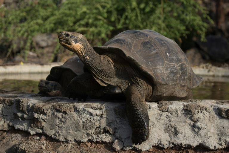 Donfaustoi, le dernier géant découvert aux Galapagos