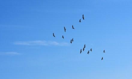 Greenpeace libère des milliers d'oiseaux destinés à la vente en Europe.