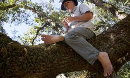 Le guide des bains de forêt – Expérimentez les pouvoirs de guérison de la nature avec M. AMOS CLIFFORD