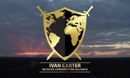 Les actions de l'ONG d'Ivan Carter pour la biodiversité et les chimpanzés en Afrique