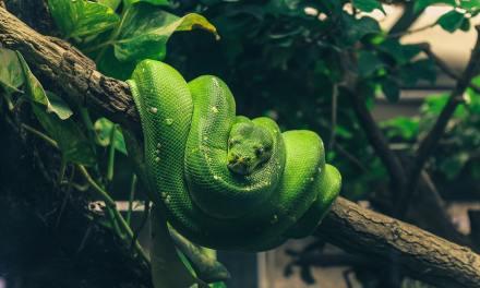 Vous adorez les reptiles et vous souhaitez en acquérir un. Quelques conseils.