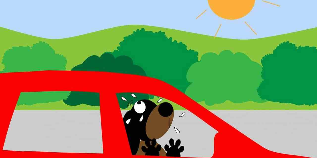 Canicule: a-t-on le droit de briser la vitre d'une voiture pour sauver un chien?