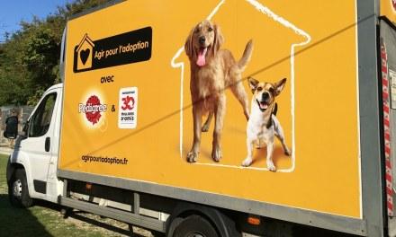 France – 30 Millions d'Amis et Pedigree livrent 2 millions de repas aux chiens des refuges