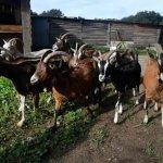 Trémargat, le village breton « hors norme » et durable