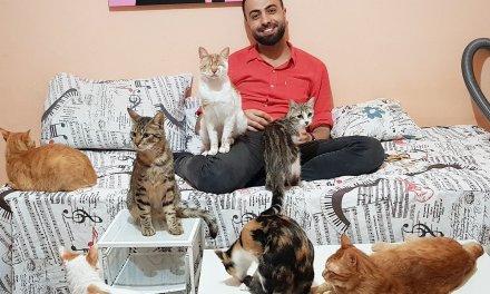 Cet homme recueille des chats abandonnés et les réconforte en leur jouant du piano !