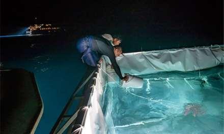 Australie – Pour sauver la Grande Barrière, un ambitieux programme d'élevage de larves de coraux