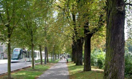 Les arbres rendent-ils nos villes plus respirables ?