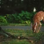 500 hectares sans chasseurs dédiés à la vie sauvage dans le Vercors