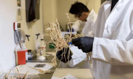 Cette startup veut remplacer les engrais chimiques par des probiotiques