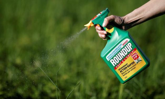 Glyphosate : la justice annule l'autorisation de mise sur le marché du Roundup Pro 360