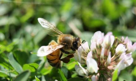 Haute-Garonne: Des apiculteurs vous envoient des graines pour sauver les abeilles (et c'est gratuit)
