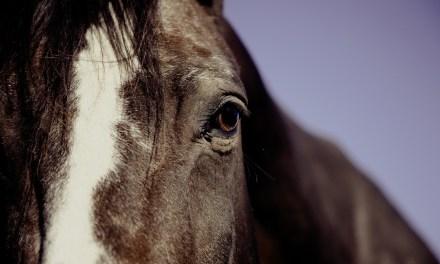 Le cheval, pour aider les autistes à s'ouvrir au monde