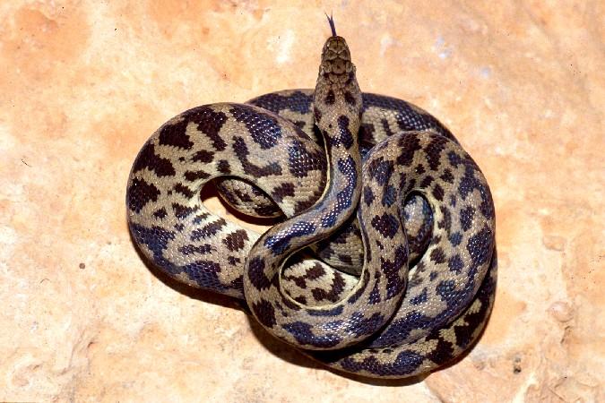 Grande-Bretagne: Elle découvre un python dans sa valise en rentrant d'Australie