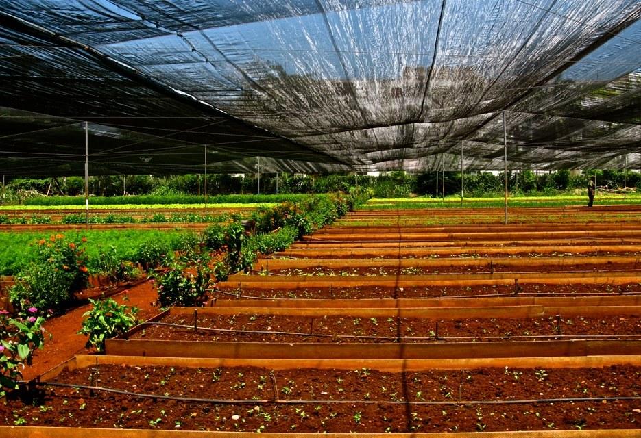 La Havane, un quart de siècle d'agriculture urbaine