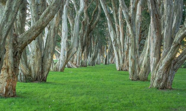 L'Australie va planter un milliard d'arbres pour lutter contre le réchauffement climatique