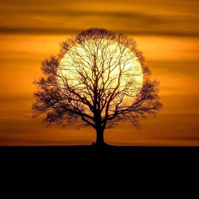 «L'arbre Soleil» – ©Tobias Messerli
